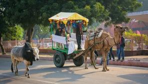 a India 049