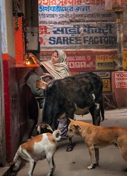 a India 061