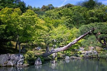 a KyotoMD 063