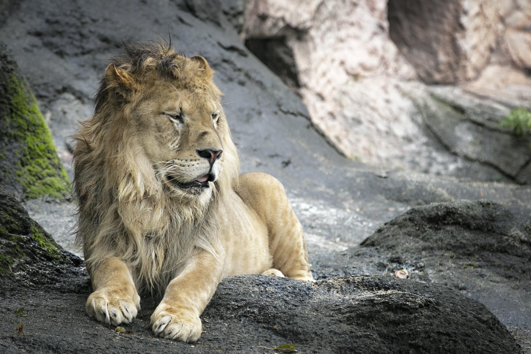 the joy of animals charles levie