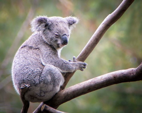 a-australia-023