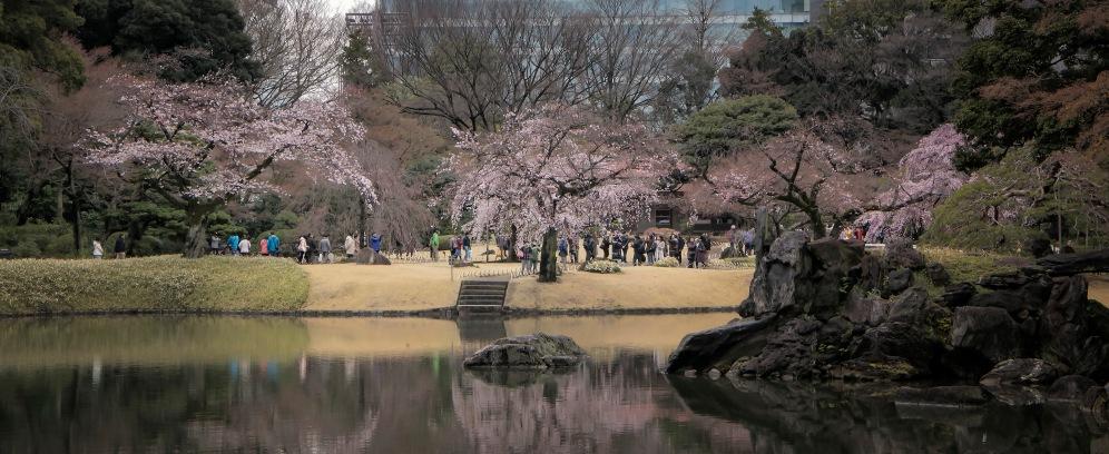 a TK Sakura 008