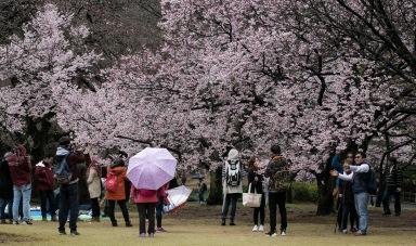 a TK Sakura 010