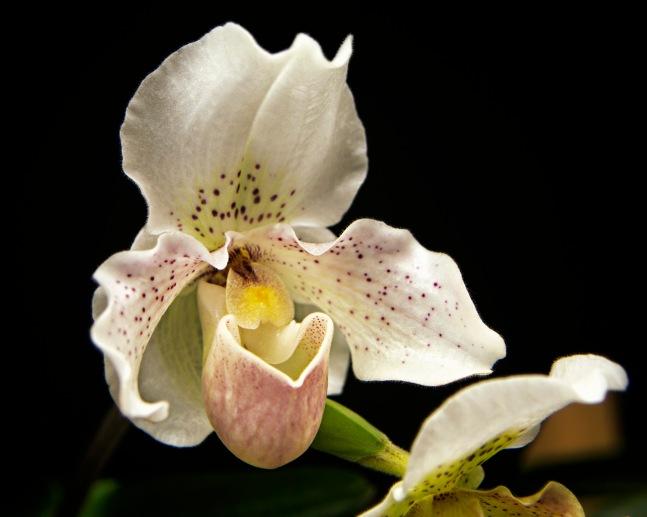a Flower 006