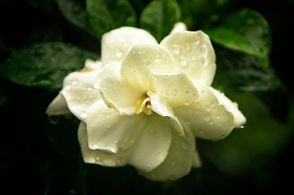 a Flower 011