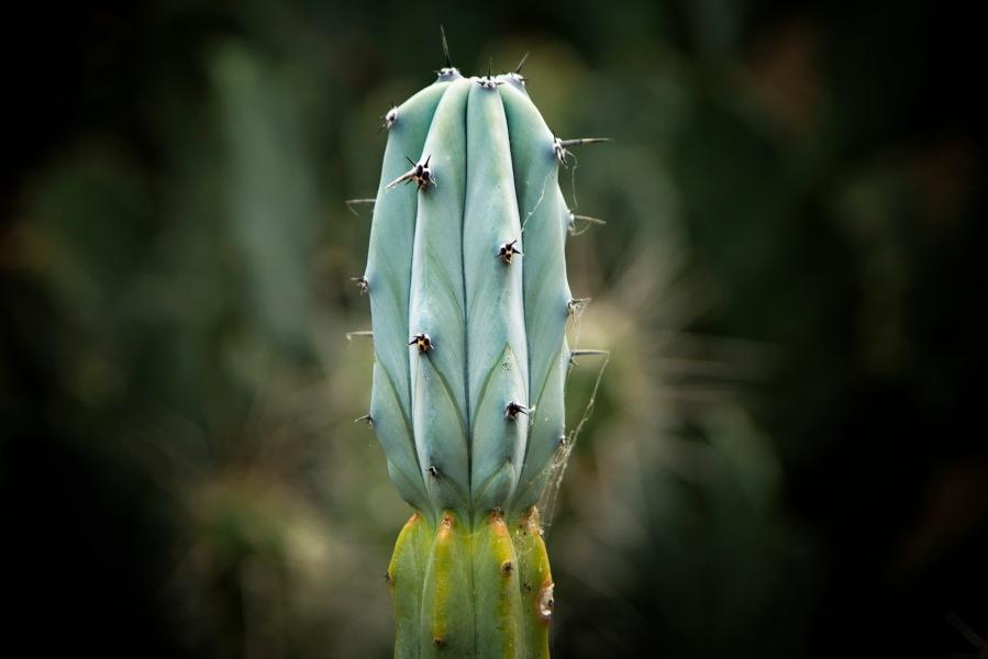 a Flower 014