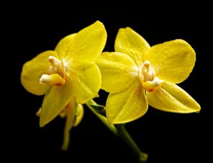 a Flower 017