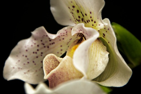 a Flower 018