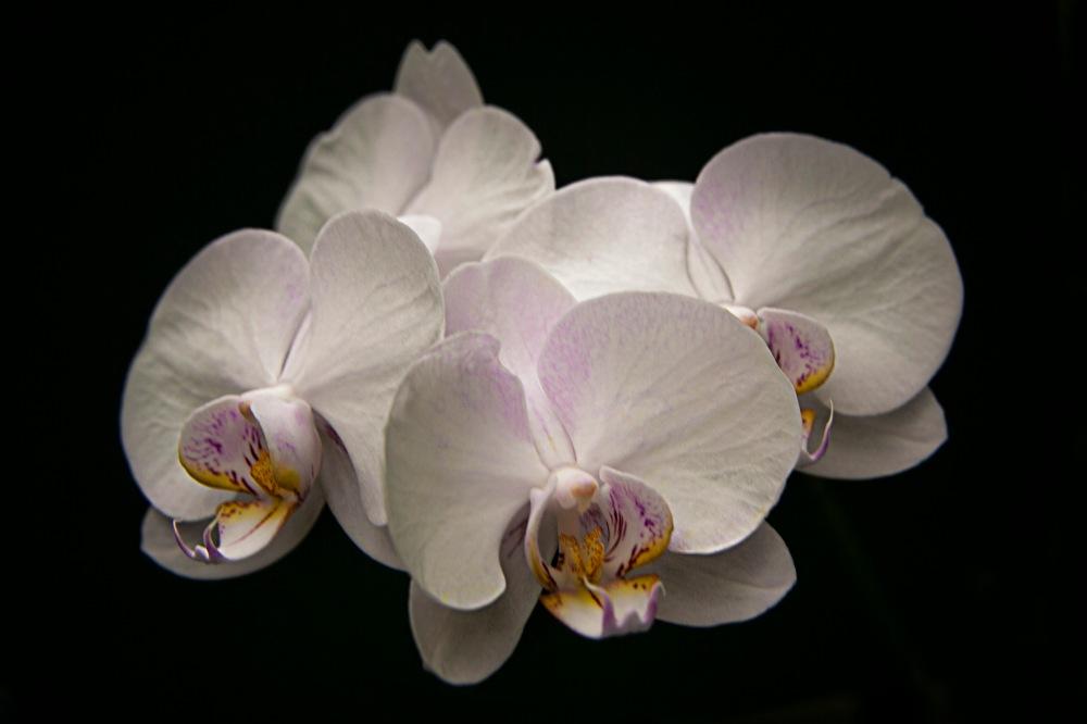 a Flower 020