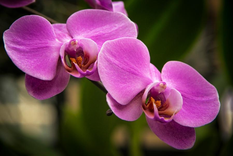 a Flower 004