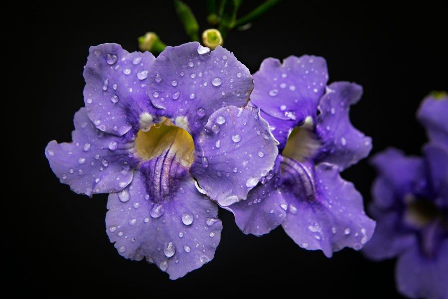 a Flower 012