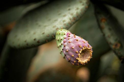 a Flower 015
